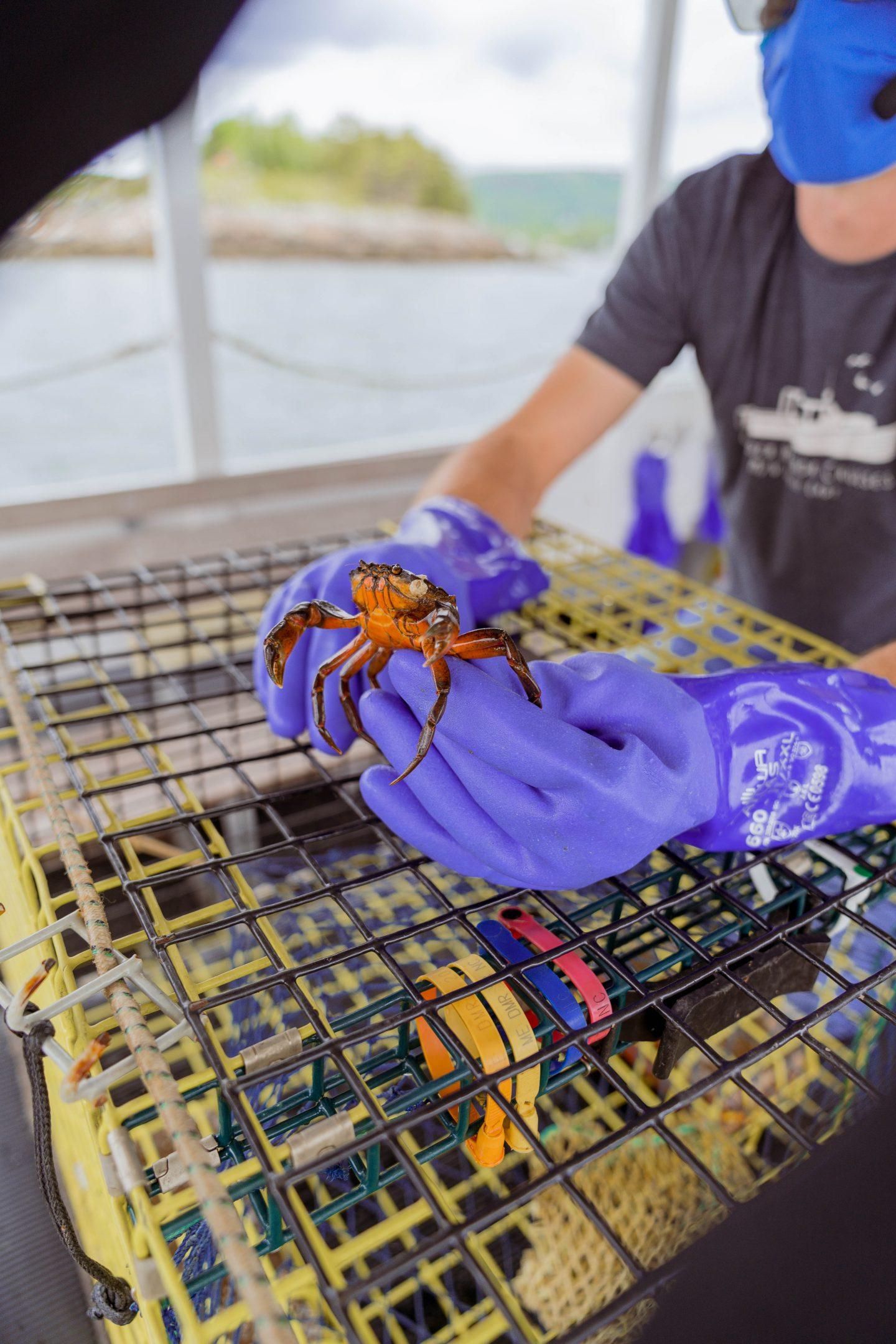 livinglesh camden maine lobster boat tour