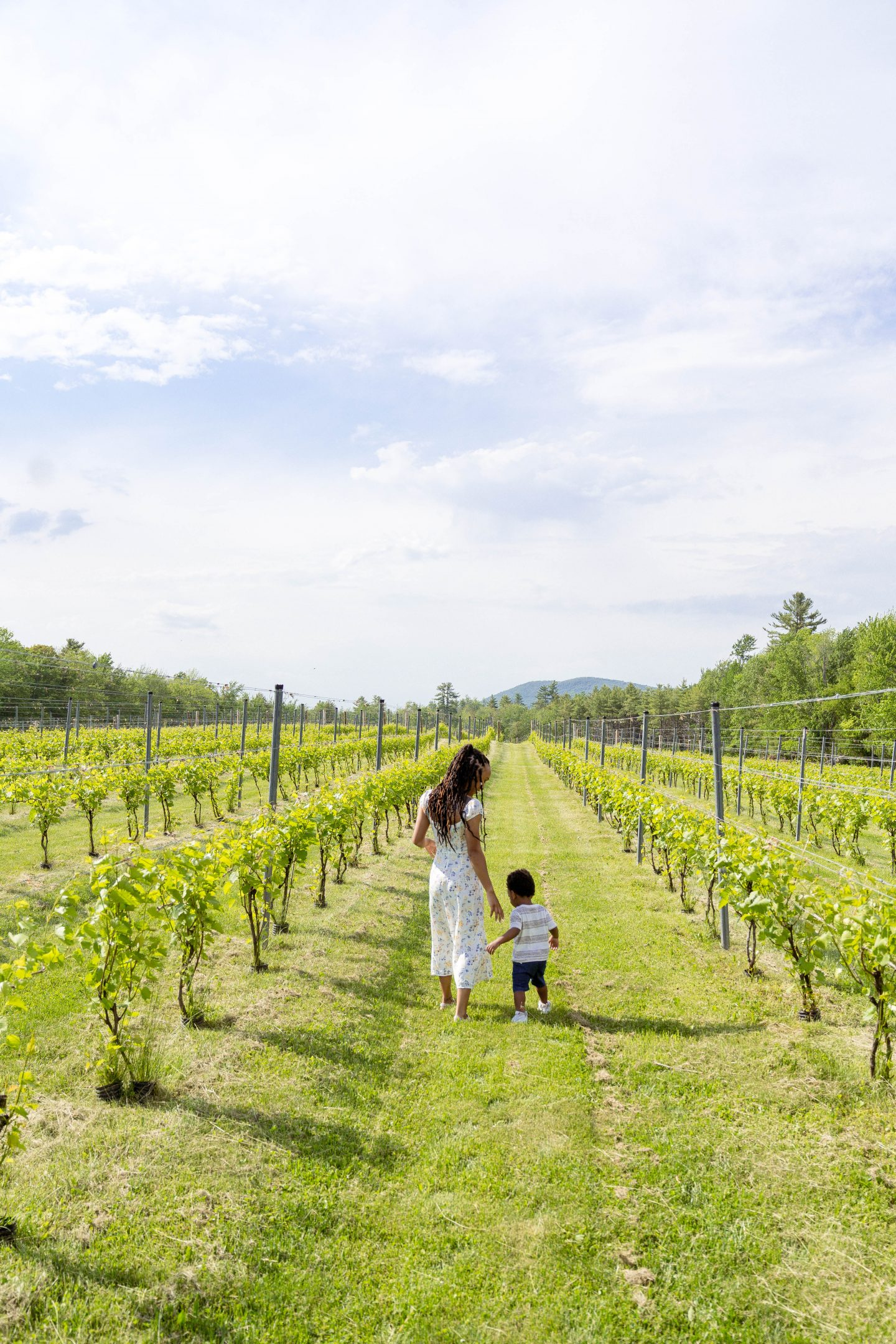 livinglesh cellardoor winery vineyard