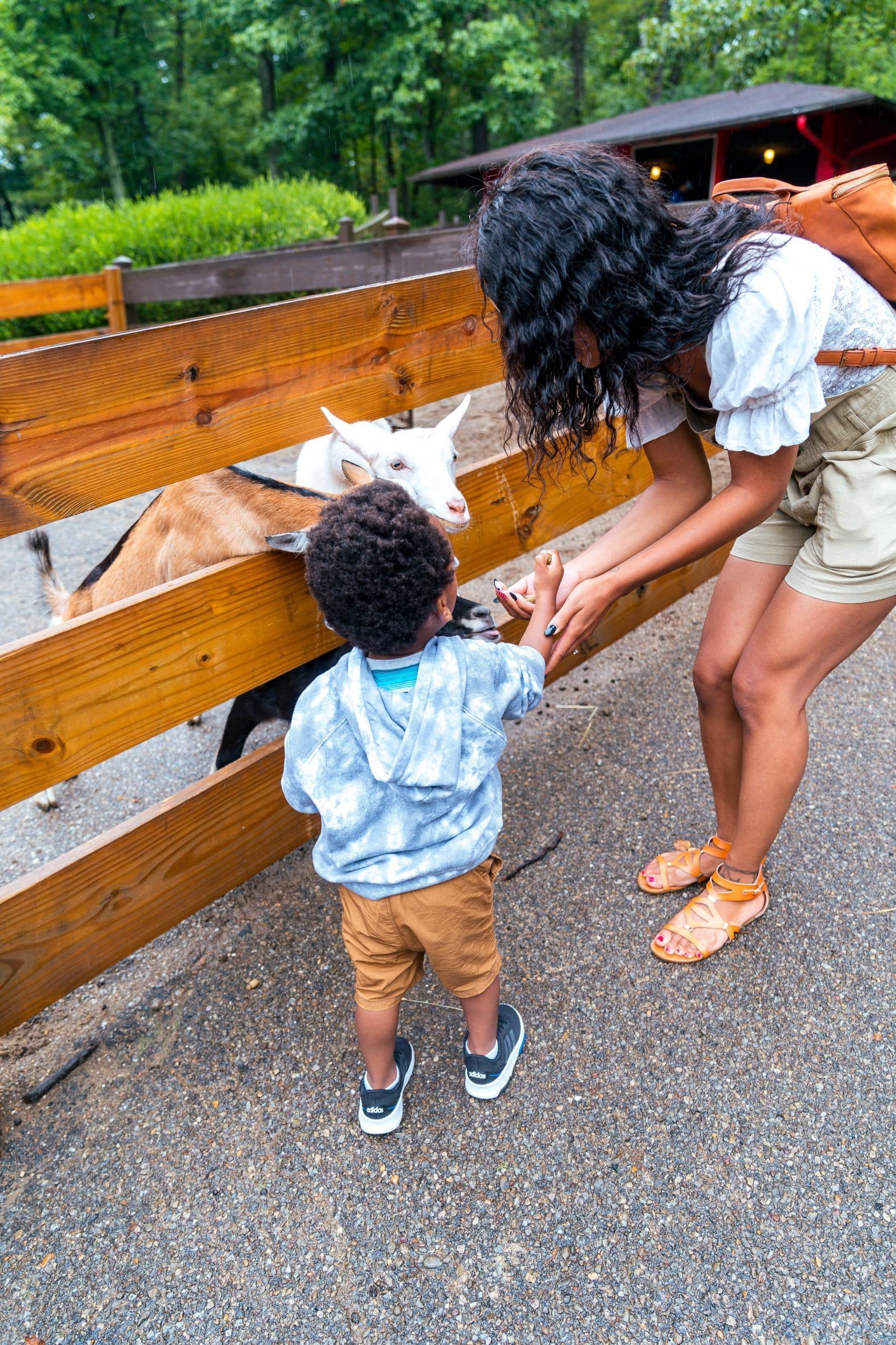 livinglesh behind the scenes tour oglebay zoo