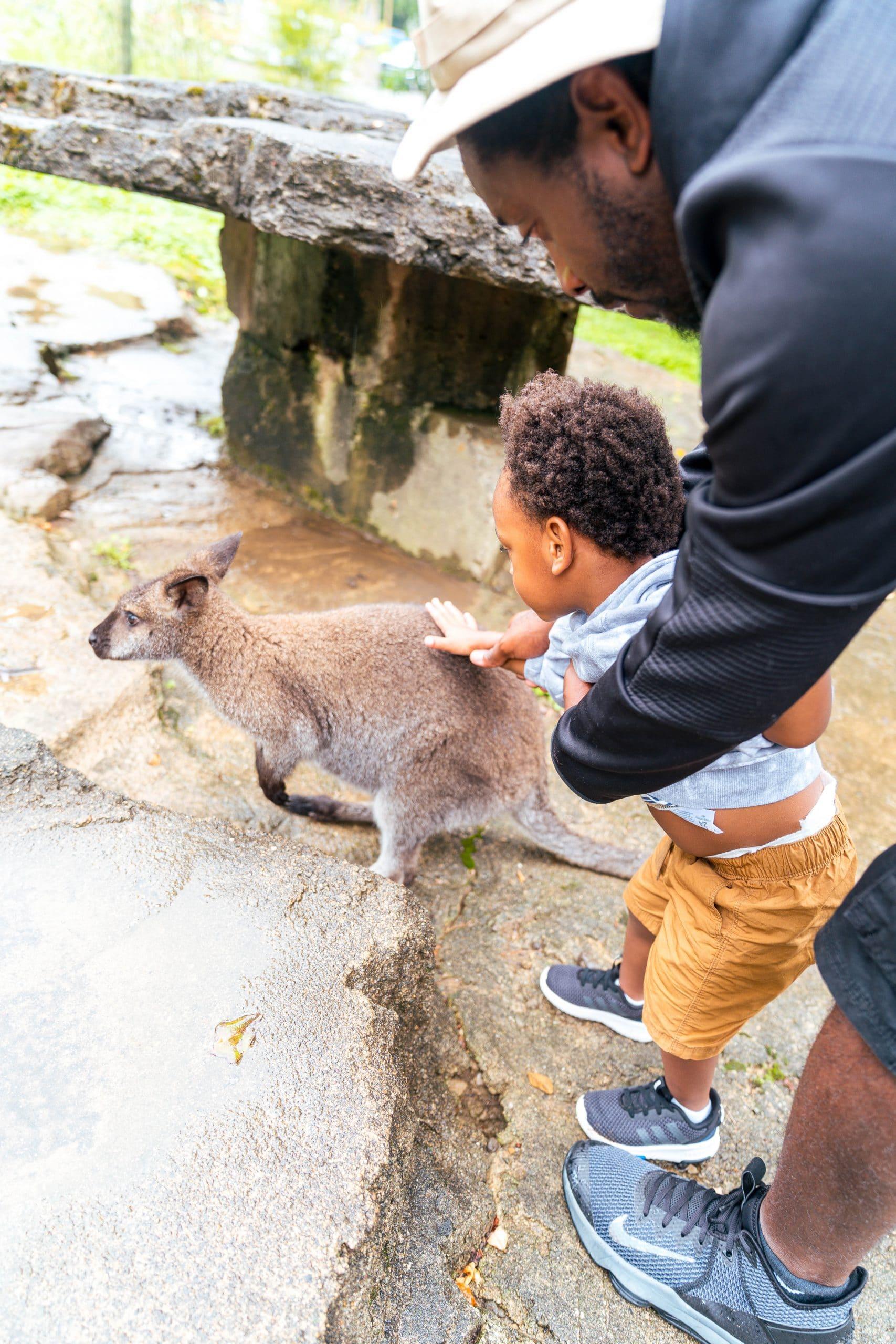 livinglesh oglebay resort zoo west virginia